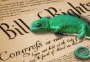 Ideological Chameleons